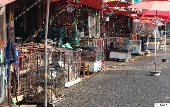 전국 최대 규모의 '개고기 시장'이