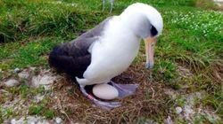 세계에서 가장 나이 많은 새가 새로운 알을