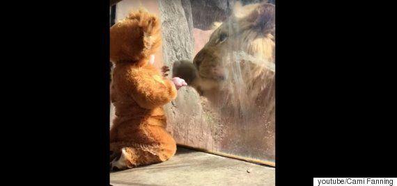 동물원의 사자가 사자 옷을 입은 아기에게