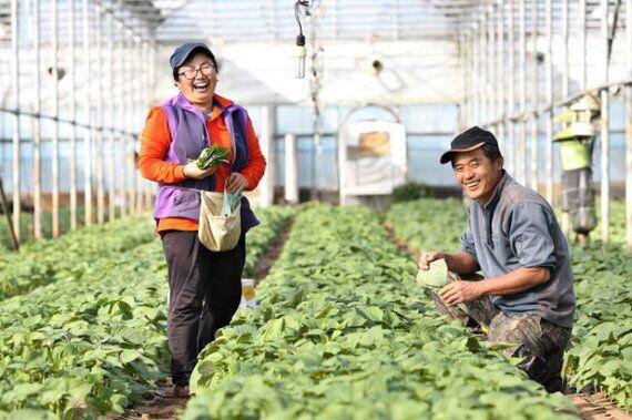 끝까지 간다 | 제주에서 깻잎 농사짓는 강순희·김만호