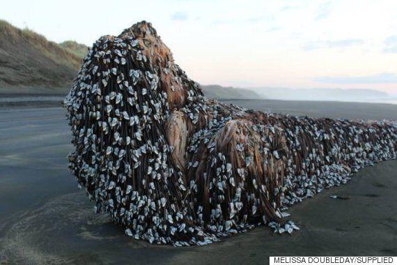 뉴질랜드 해변에 나타난 이 괴물의