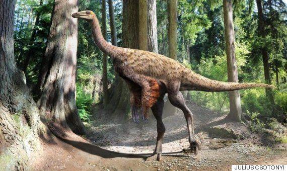 과학자들이 호박에 갇힌 공룡 꼬리를