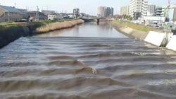 후쿠시마 지진으로 강물이