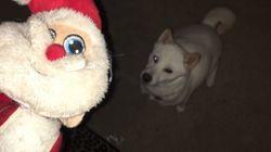 산타를 너무나 사랑하는 강아지가 마침내 소원을