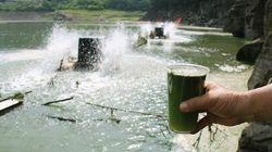 지난 10년간 '녹조라떼'가 가장 심했던 식수원은 바로