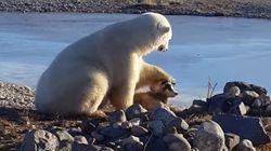 개를 만난 북극곰은 개가