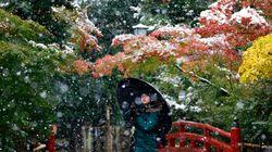 도쿄가 54년 만에 처음으로 11월에 첫눈을