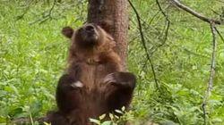 나무에 등을 긁는 곰을 보는 건 참 행복한