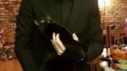 주인이 사라진 자리에 거대한 고양이가