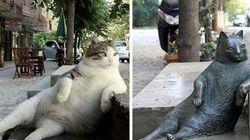 이스탄불의 여유로운 고양이 동상이