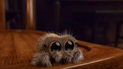 이 영상은 당신의 거미 공포증을 없애줄