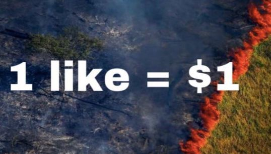 Instagram Scammers Are Using The Fires In The Amazon To Rip People