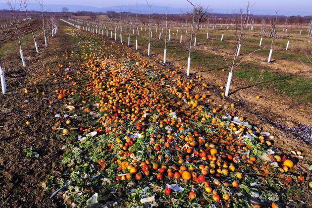 Fruit and vegetables with small blemishes are discarded to rot in plantations in rural Mainz. On average...