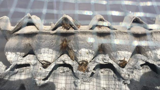 Στην Costa Rica Insect
