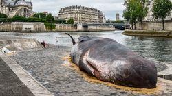 이 고래는 어쩌다 파리의 센 강가에서 죽어