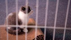 Un premier chat cloné en