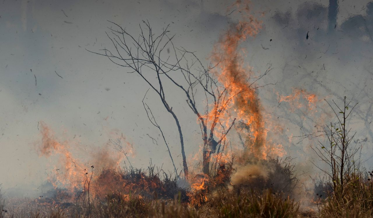 The Amazon has been burning for weeks. Scammers see the fires as an opportunity.