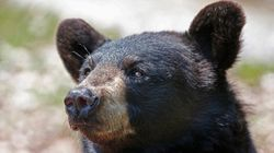 Black Bear Kills U.S. Woman In 'Extremely Rare' Northern Ontario