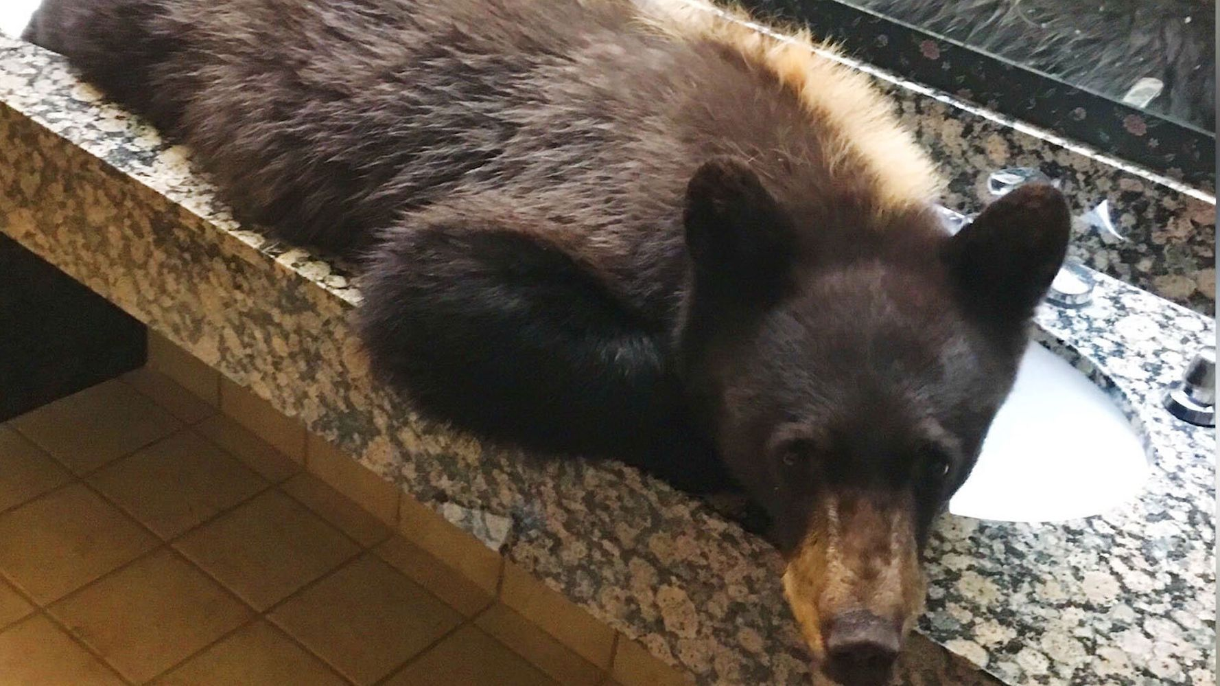 Young Black Bear Sneaks Into Hotel Bathroom For A Nap