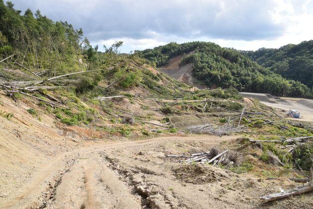 木が倒れ道には穴のようにくぼんだ亀裂が走っている=2019年9月1日