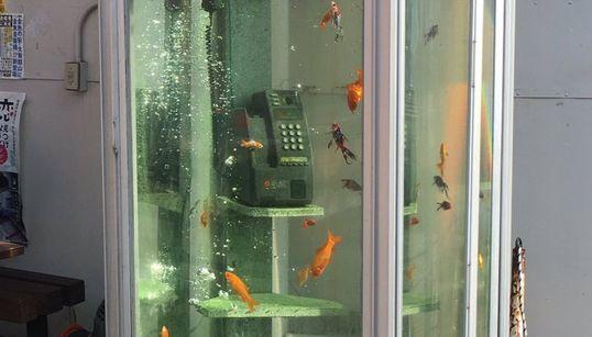 일본에는 전화박스 속을 헤엄치는 금붕어가