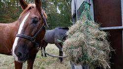 말(馬)'은 원래 과거 역사의 중심에