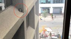 빌딩 외벽에 갇힌 아기 너구리가 이틀 만에 구조된 순간