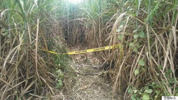 필리핀 한인 3명 살인 사건의 유력 용의자가 증거 불충분으로
