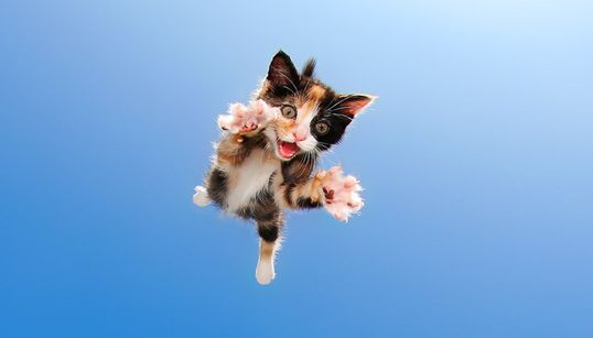 시국에 마음이 멍든 당신을 위한 날아다니는 새끼 고양이
