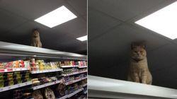 '내가 이 슈퍼마켓을 통치해