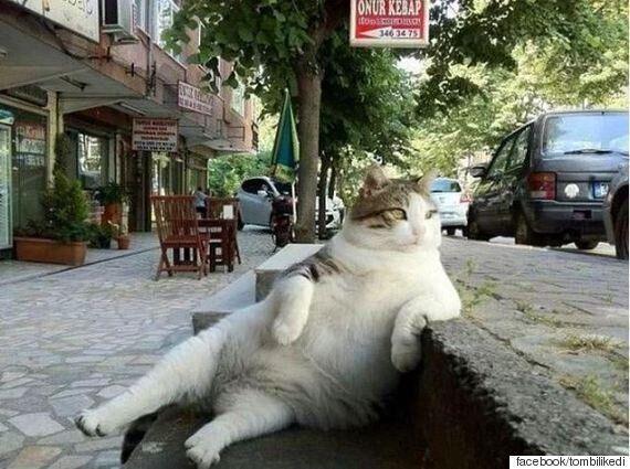 이스탄불의 여유로운 고양이가 동상으로