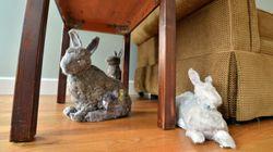 이건 토끼다, 아니 먼지다