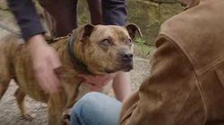세상에서 가장 외로운 개가 '트랜스포머'에