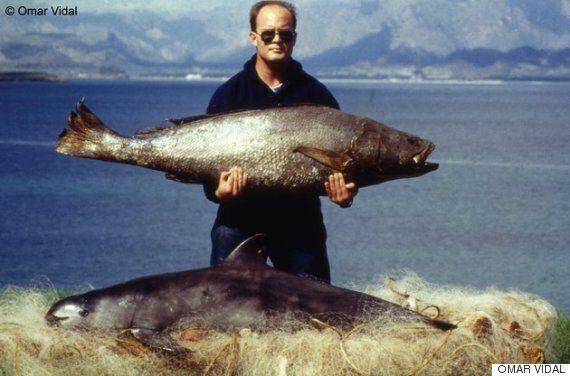 '바다의 코카인' 때문에 세계에서 가장 작은 돌고래가 다 죽어가고