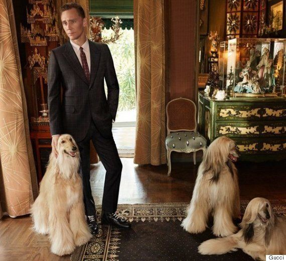 톰 히들스턴이 구찌의 얼굴이 됐지만, 모든 관심은 강아지에게