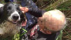 경찰도 찾지 못한 '갈대 늪에 빠진 80대 노인'을 이 개가