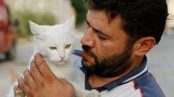 시리아 알레포에 남아 고양이들을 돌보는