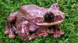 세상에서 가장 외로운 개구리 '터피'가