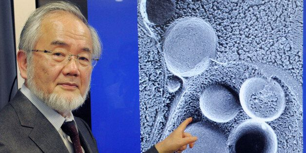 Yoshinori Ohsumi, a professor of Tokyo Institute of Technology is pictured in Tokyo, Japan, March 25,...