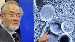 노벨상 수상자 일본 오스미는 50년 외길을