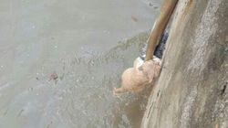 태풍에 익사할 뻔한 길고양이를 구한