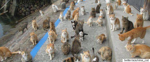 사람들은 허리케인에서 구조된 고양이와 사랑에