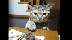 고양이는 앞에 있는 생선이 먹고 싶지만, 집사가