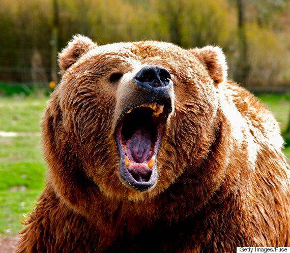 곰에게 두 번 공격당하고 살아남은
