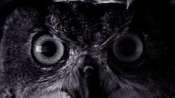 새로운 아이폰7 광고는 '호러영화'