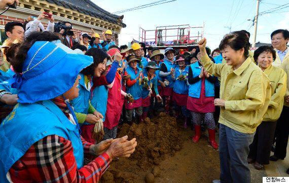 청와대가 박 대통령이 밟지 않은 흙사진 보도에