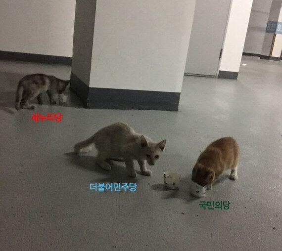 국회 의원회관 고양이 삼형제