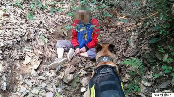 나흘간 실종된 치매 노인을 3km 떨어진 야산에서 찾아낸 개가