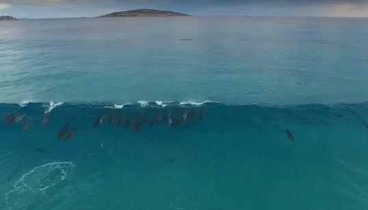 큰 파도를 만난 돌고래들이 먼 바다로 돌아가는 장면은 정말