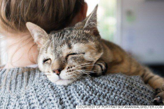 눈꺼풀 없이 태어난 두 고양이에게 새로운 삶이